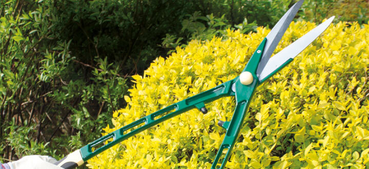 Super-lightweight Hedge Shears