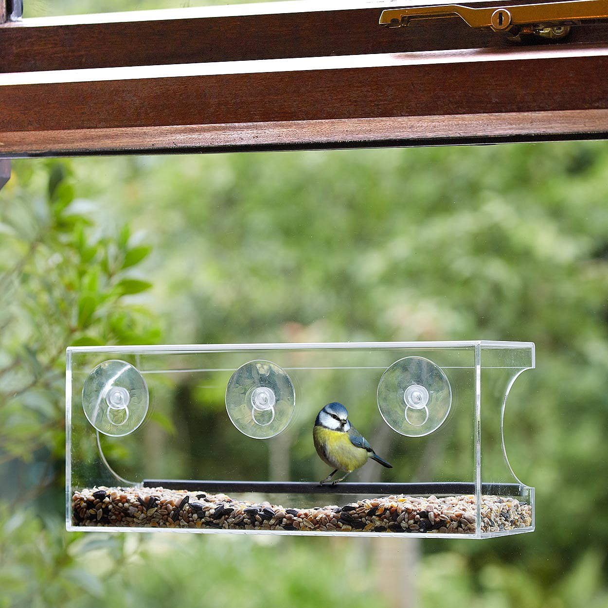 Window Bird Feeder Bird Care Coopers Of Stortford
