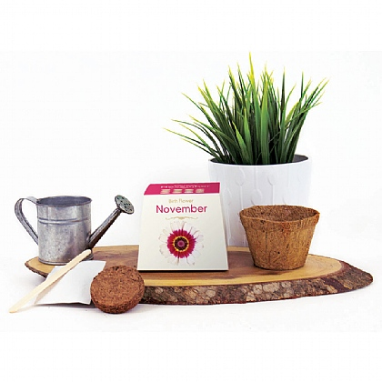Birth Flower Growing Kit - Buy 2 Get 1 Free