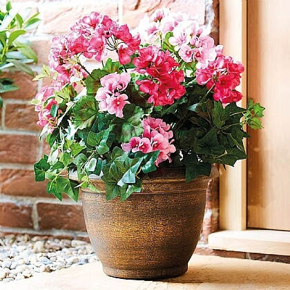 Potted Geranium - Buy 2 & Save £10