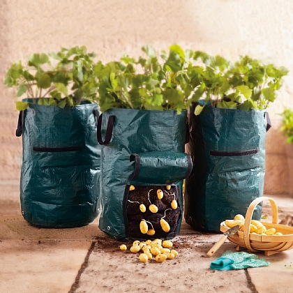 Pack of 2 Potato Planters