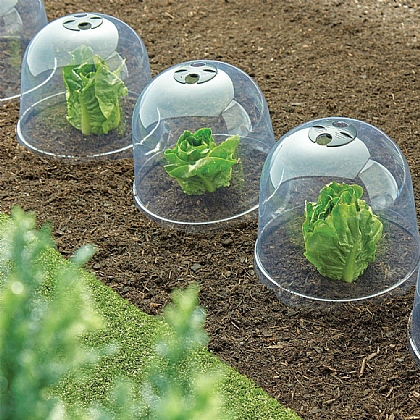 Set of 6 Cloche Plant Covers - Buy 2 Save £6